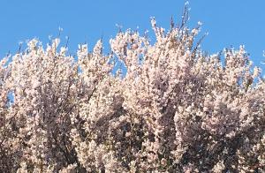 Blossom Inspiration
