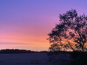 Sussex sunrise