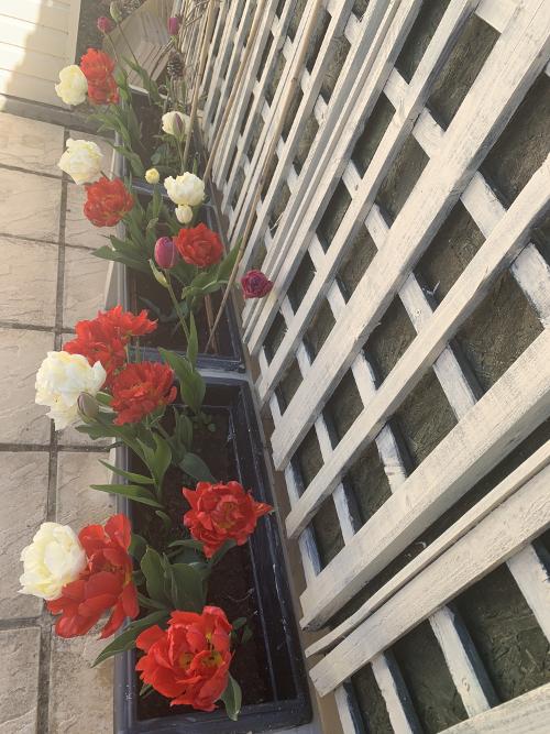 Detail of tulip planters